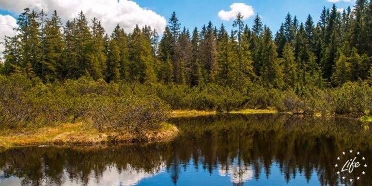 Bild von Bäumen an einem See